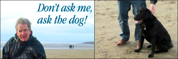 dont ask me ask the dog book cover banner