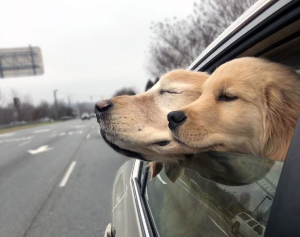 Charlie and Maverick enjoying the car ride